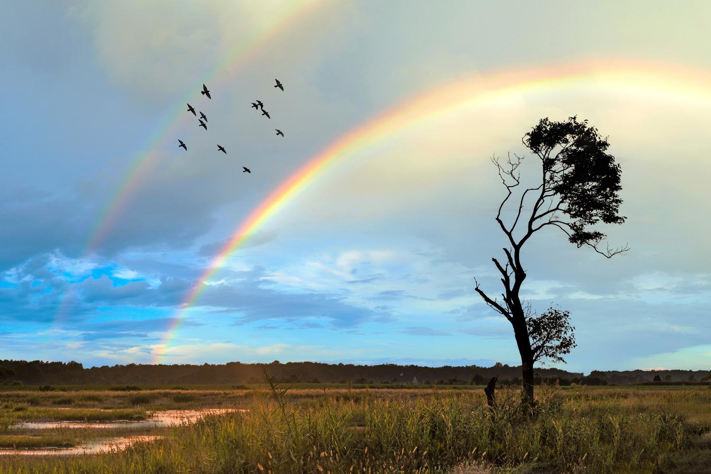 Double Rainbow by Jon Lloyd Jr