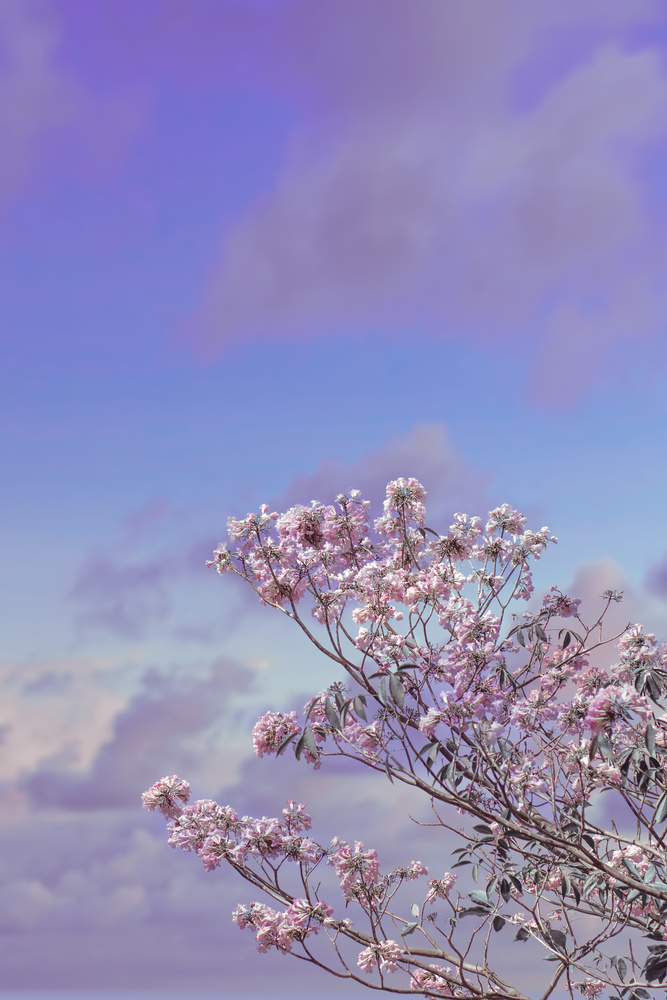 aeshthetic blossom in india by TEJAS MANAKE