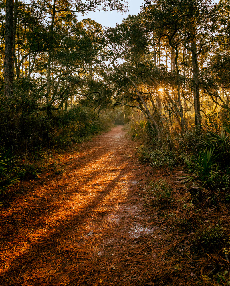 Sun and Shadows by Derek Bradley