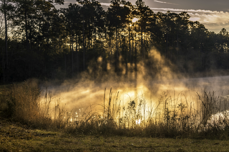 Fog Rising by Derek Bradley