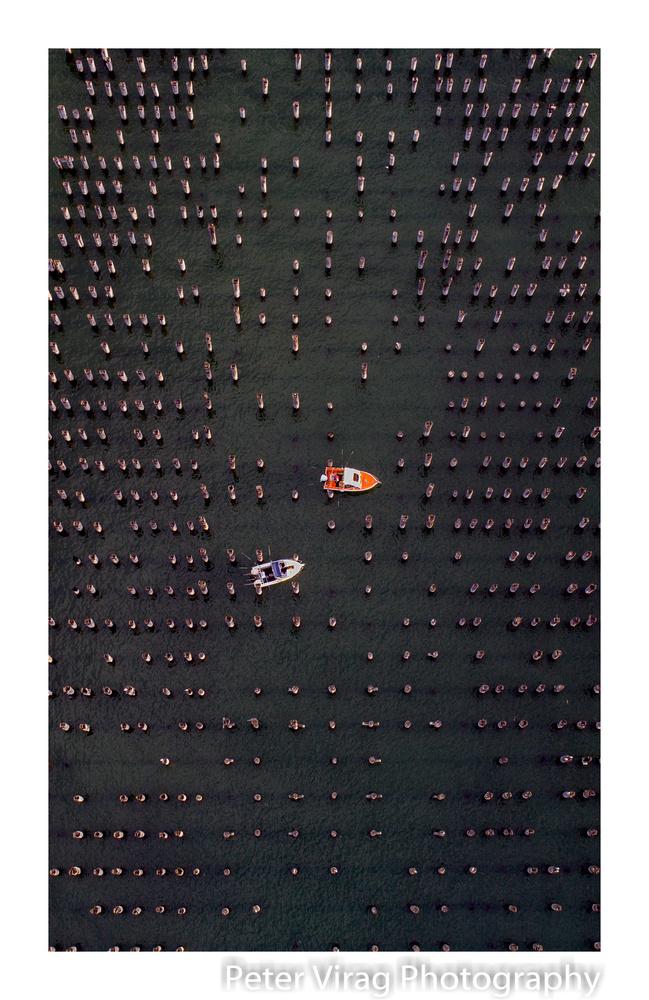 Fishing at Princes Pier by Peter Virag
