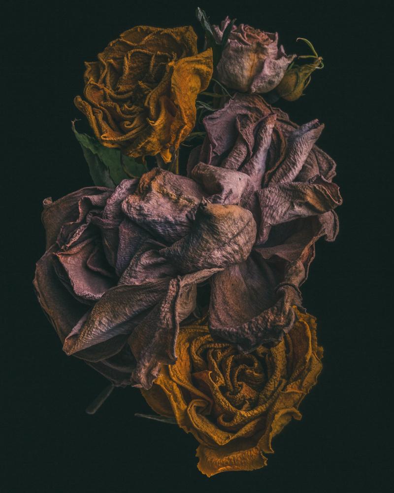No.7, The Rebirth of Flowers by Maegan McDowell