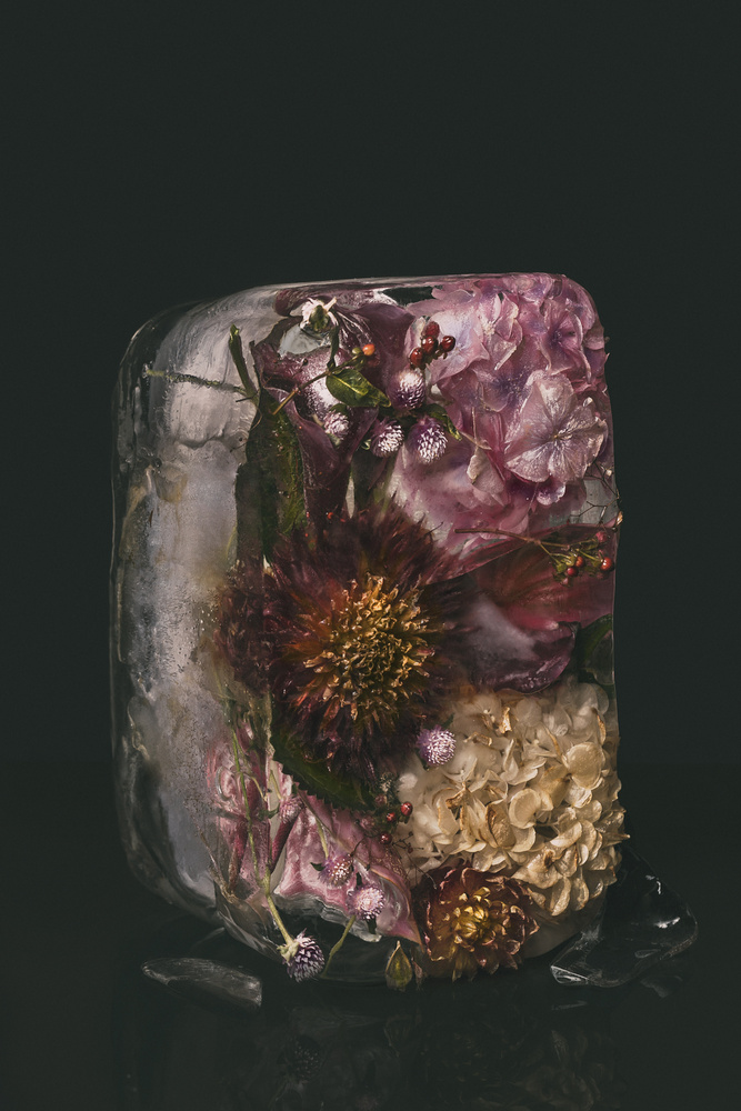 XXV, Ice Flowers Collection by Maegan McDowell