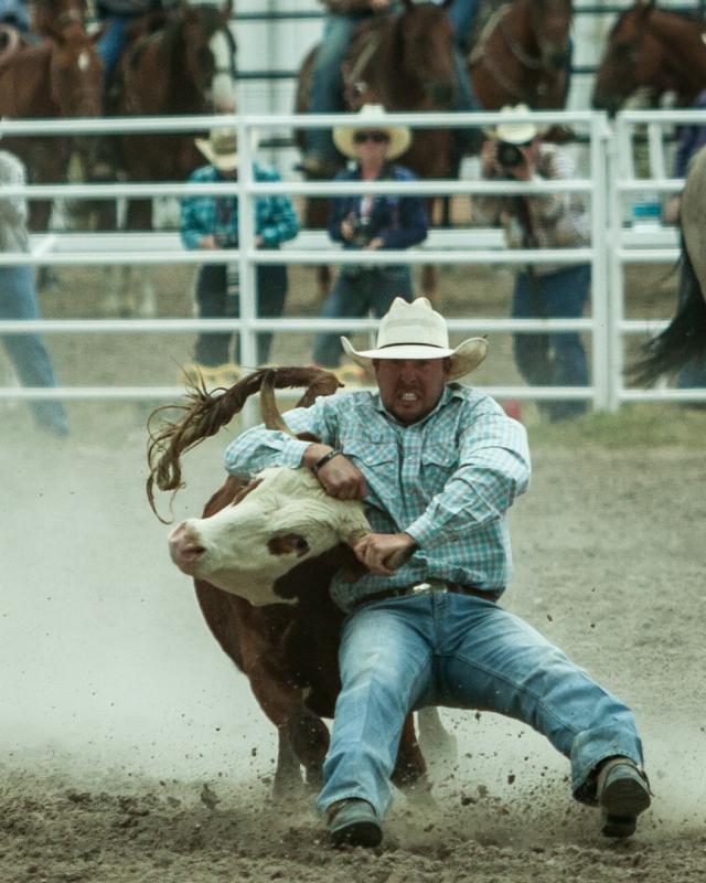 Steer that Steer by Stefan Choquette