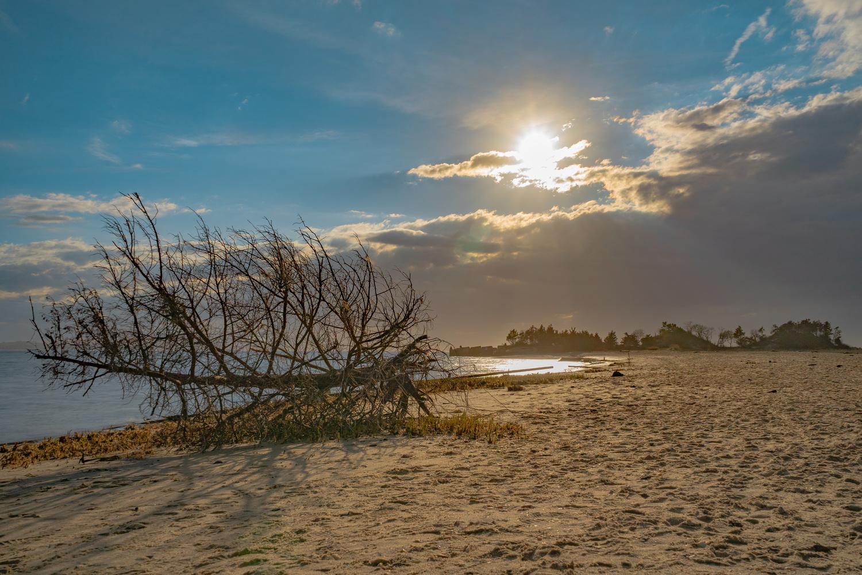 Fallen at Sandy Hook by Alexander Lobozzo