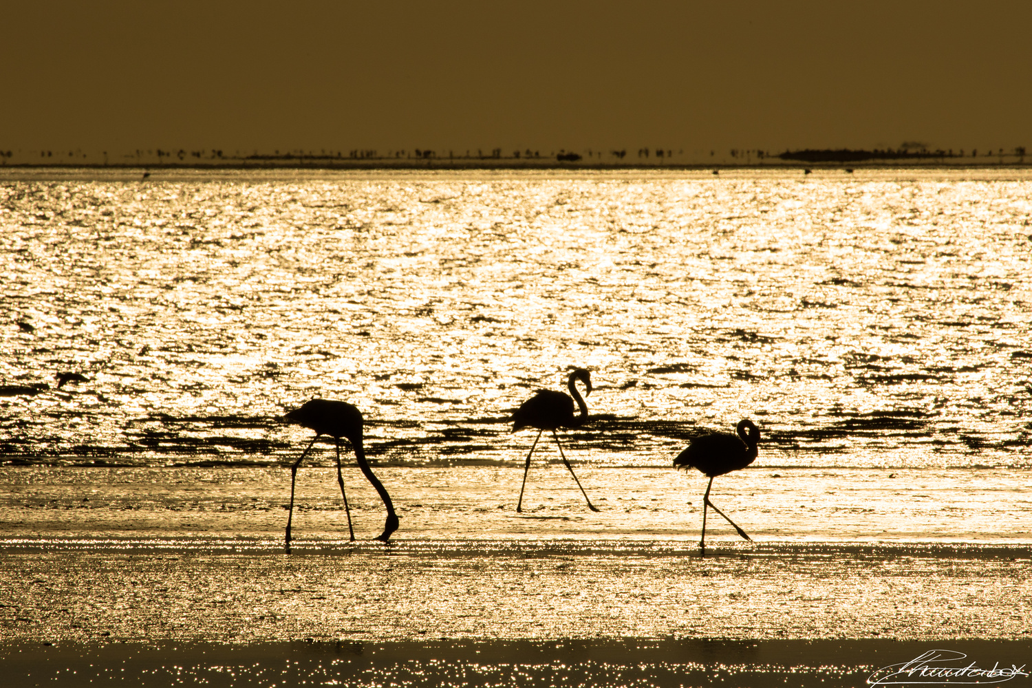Flamingos in gold by ALESSANDRO RONCHI