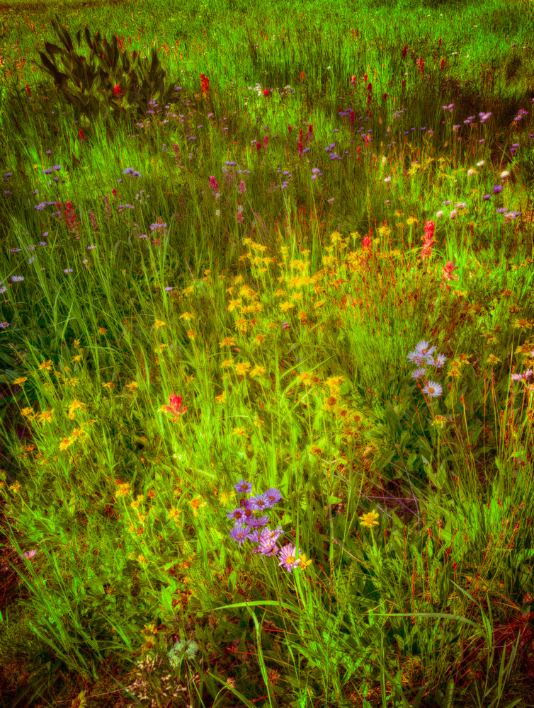 Late summer's palette by Mark Seawell