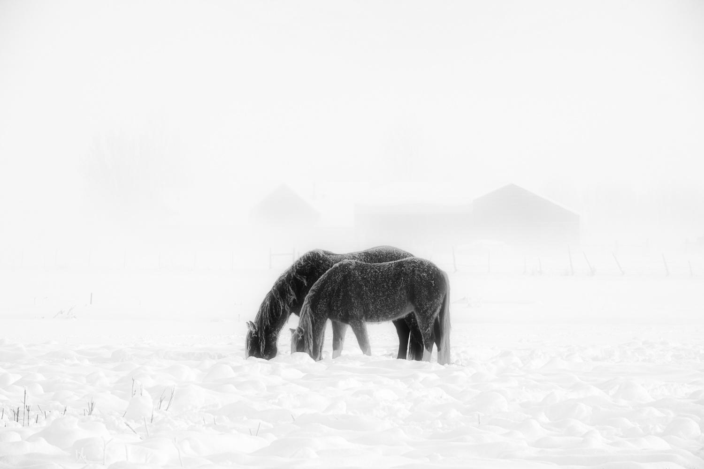 Winter Horses by Mark Seawell