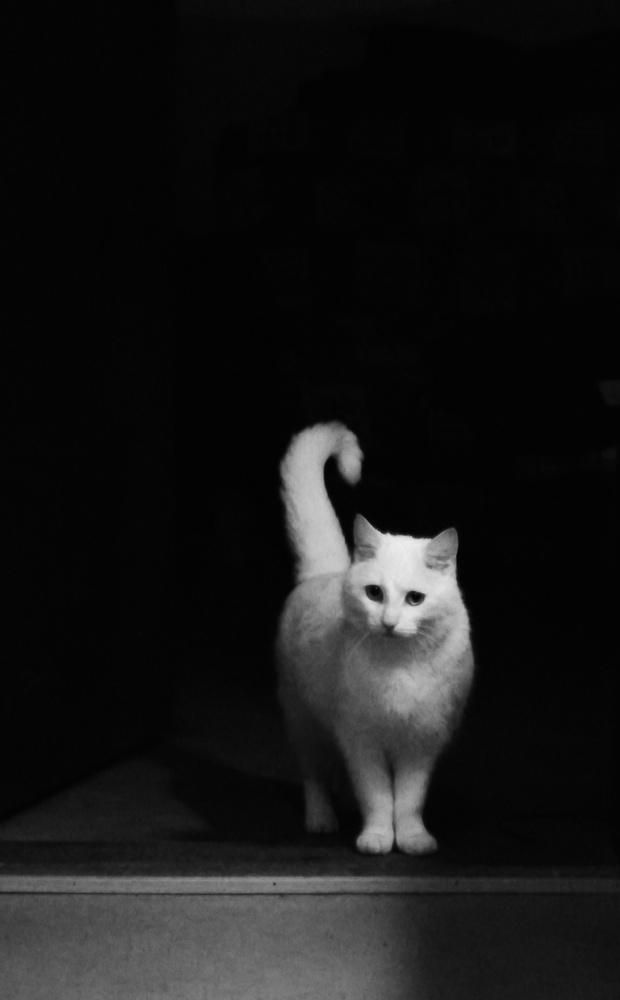 white cat by Alexandru Murar