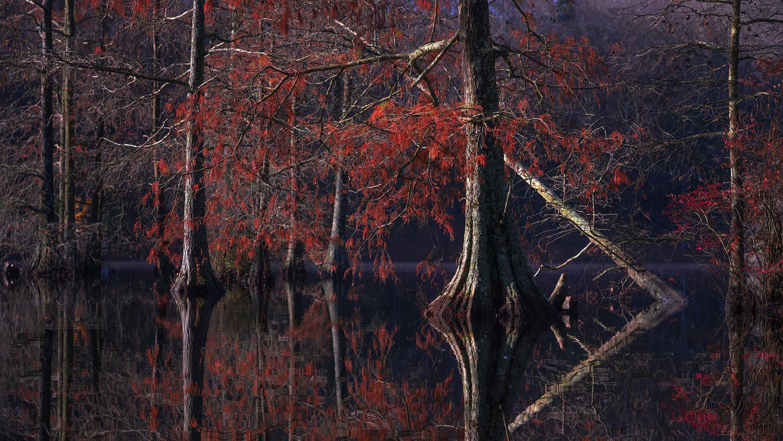 Autumn Cypress by joseph cole