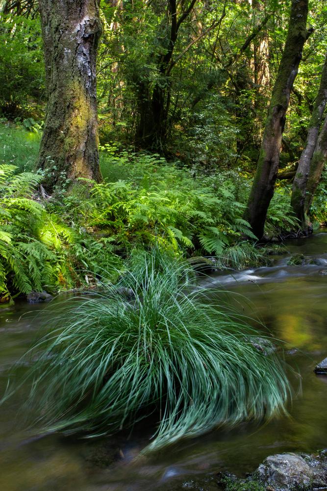 Just a Simple Little River Shot by Walker Lambert