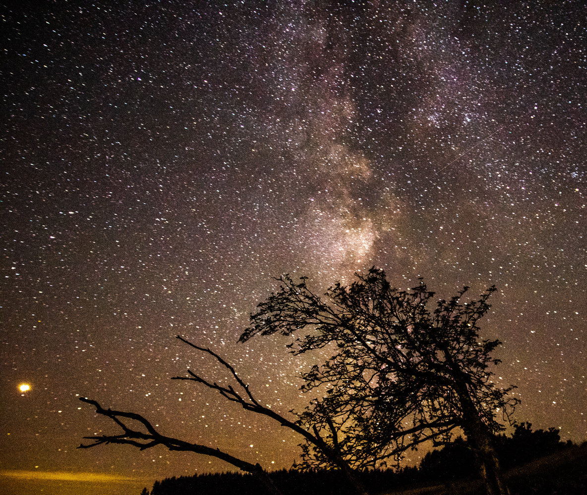 Branching out for the stars by Ellis Wood