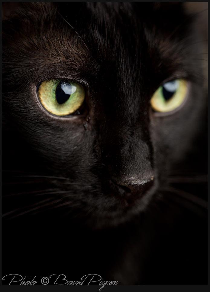 Cat 04 by Benoit Pigeon