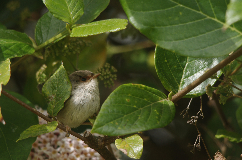 nestled in the bushes by Jeremy Martignago