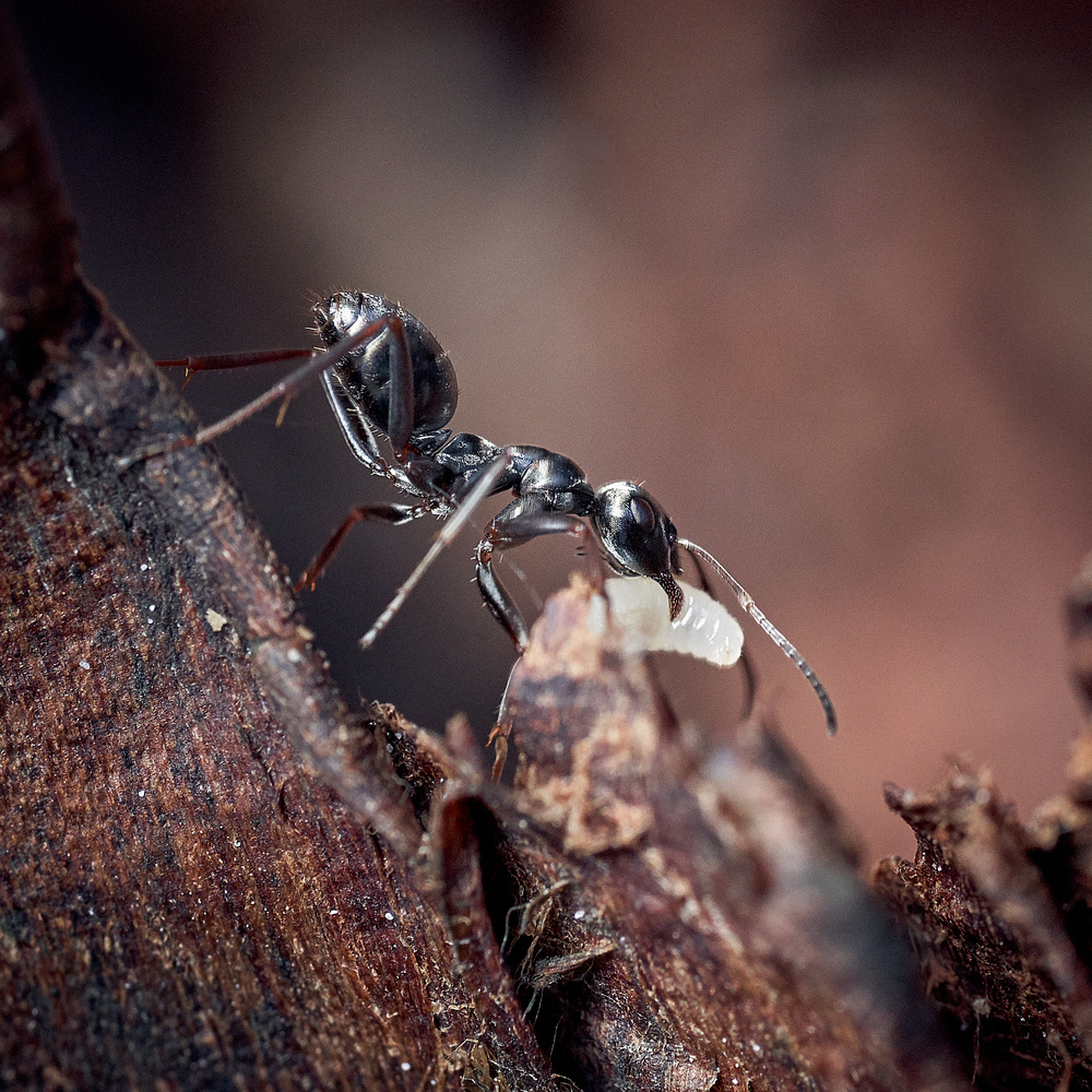 The Ant by Gion-Andri Derungs
