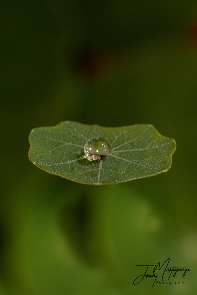 waterdrop on a leaf by Jeremy Martignago