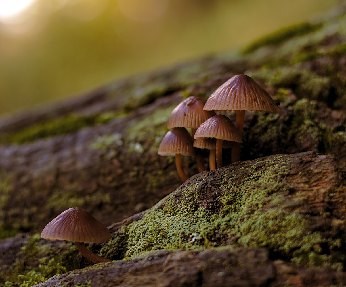 Toadstools/mushrooms by Mike Young