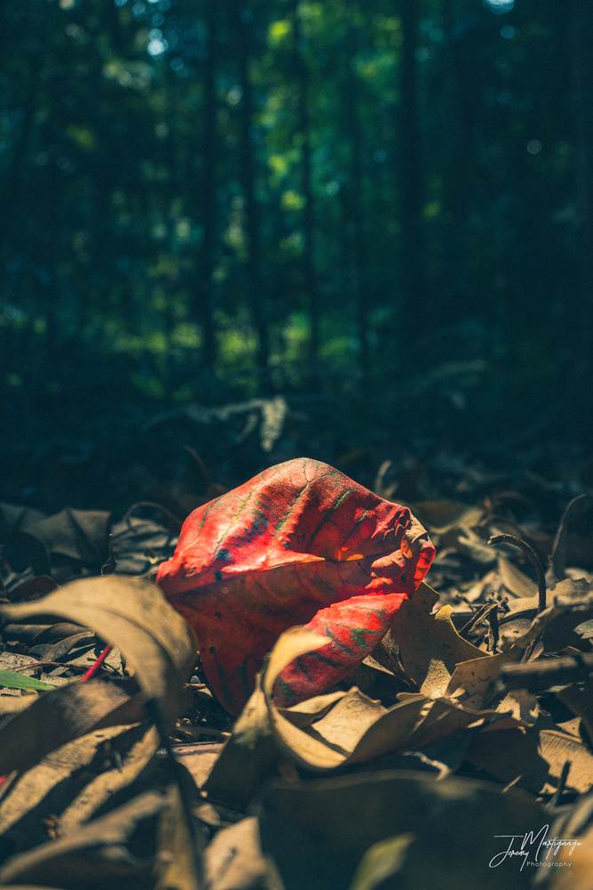 Autumn leaves by Jeremy Martignago