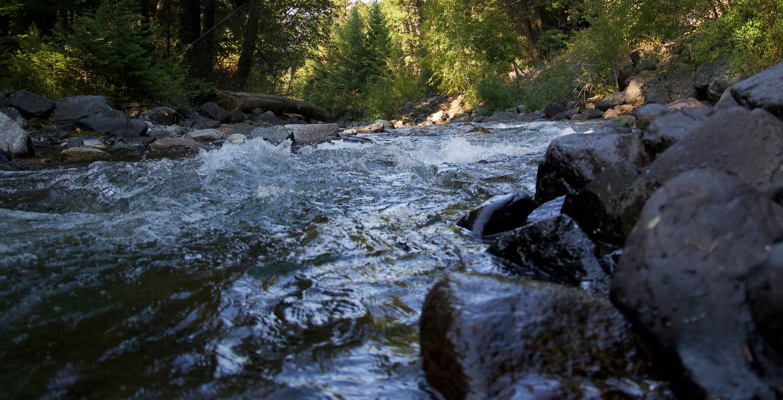 Morning Creek by Kevin Bidwell