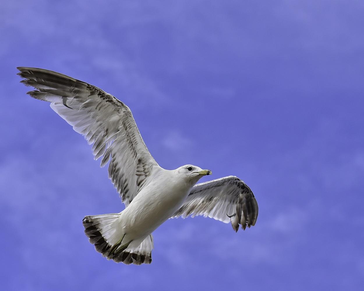 Gull by Matthew Lacy
