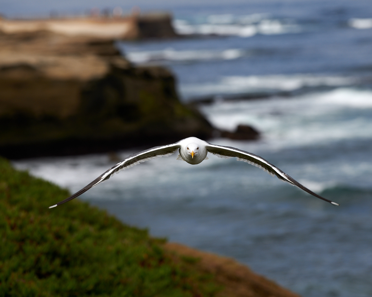 Seagull by Don Don