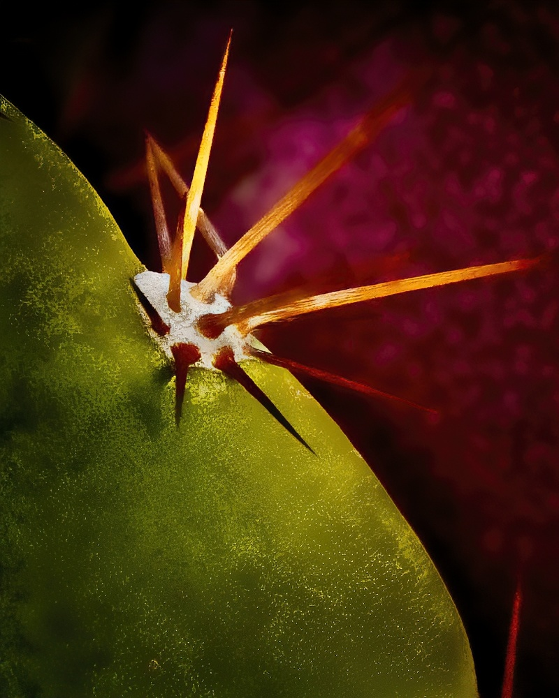 Arizona Cactus by James Zuffoletto