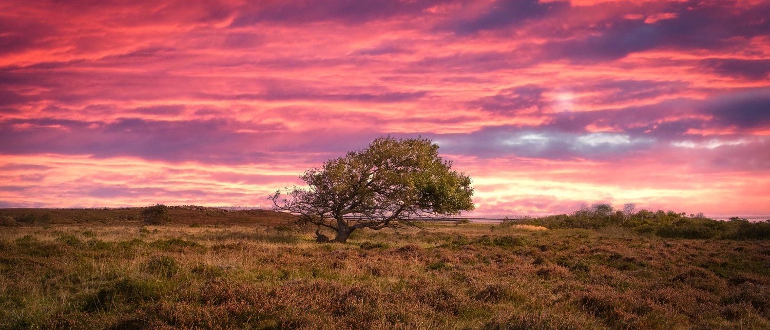 Lonely tree under sky in flames by Kandid Letters
