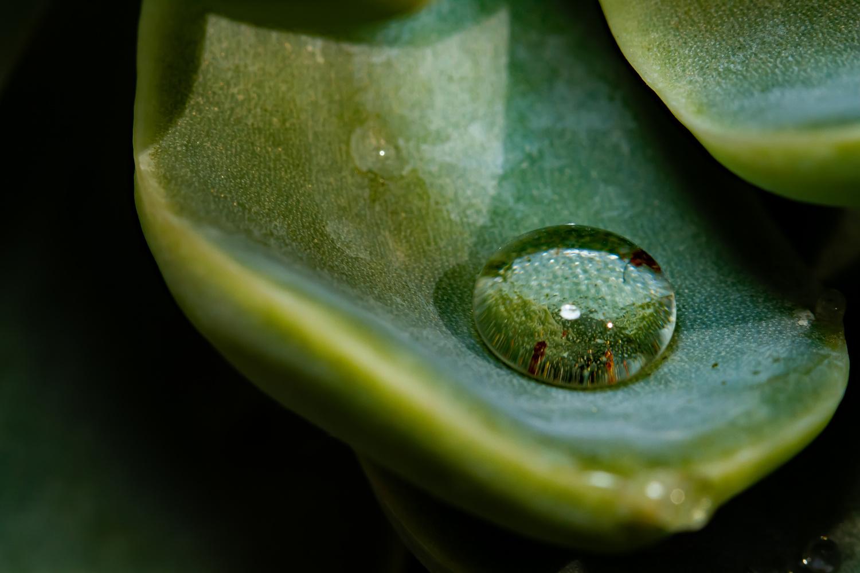 Drop of water by Lian van den Heever