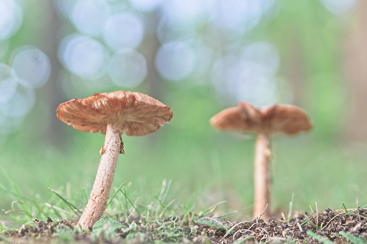 Fantastic Fungi by Matthew Lacy