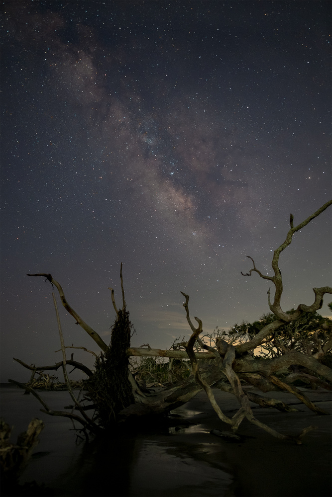 Stars and driftwood by Robert Huerbsch