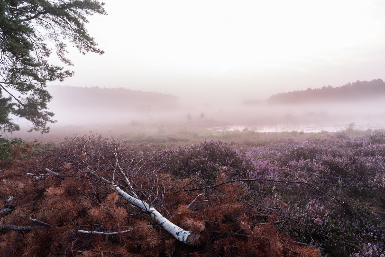 Sunrise at the moorland by Virginie Van Baelen