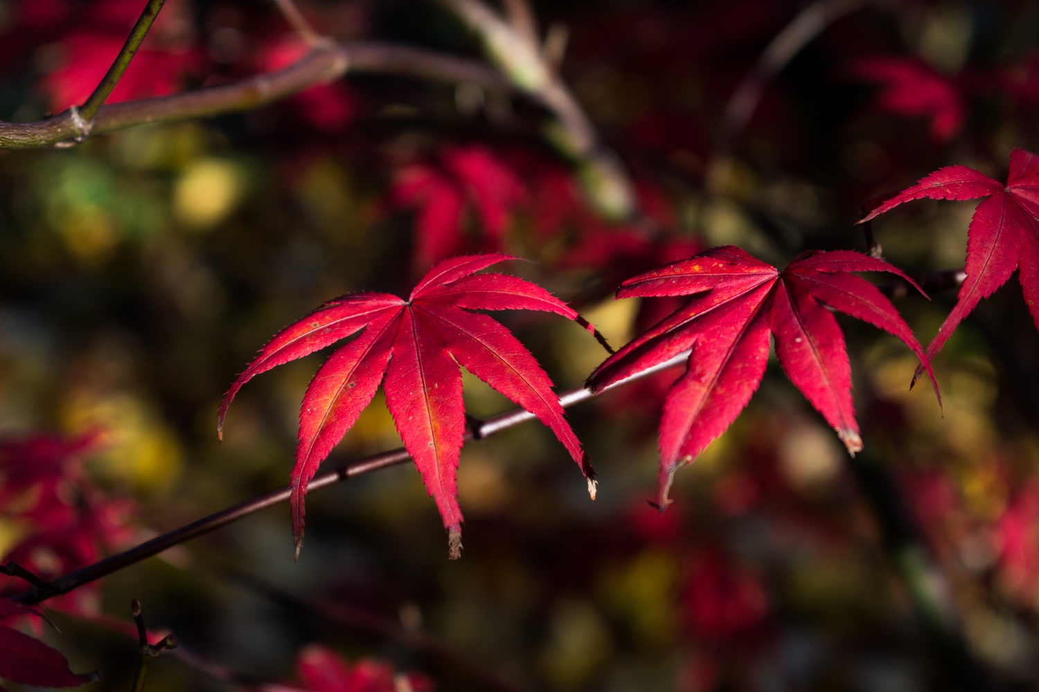 Autumn leaves by Ties Firet