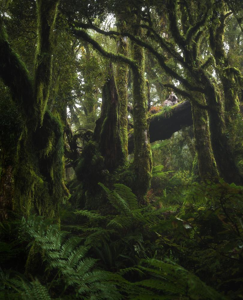 Trees of Tararua Range by Adam Wierzchowski