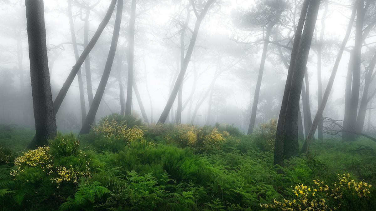 Foggy laurel forest by Kevin Teerlynck