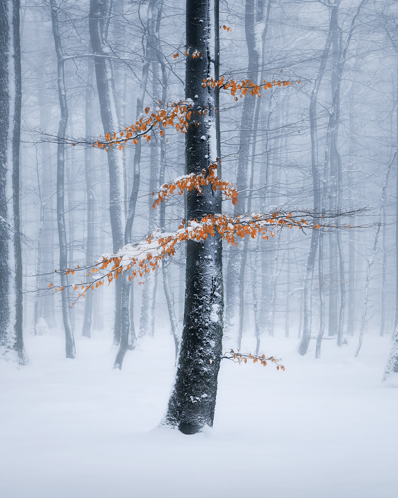 Frozen signs of last autumn by Kevin Teerlynck