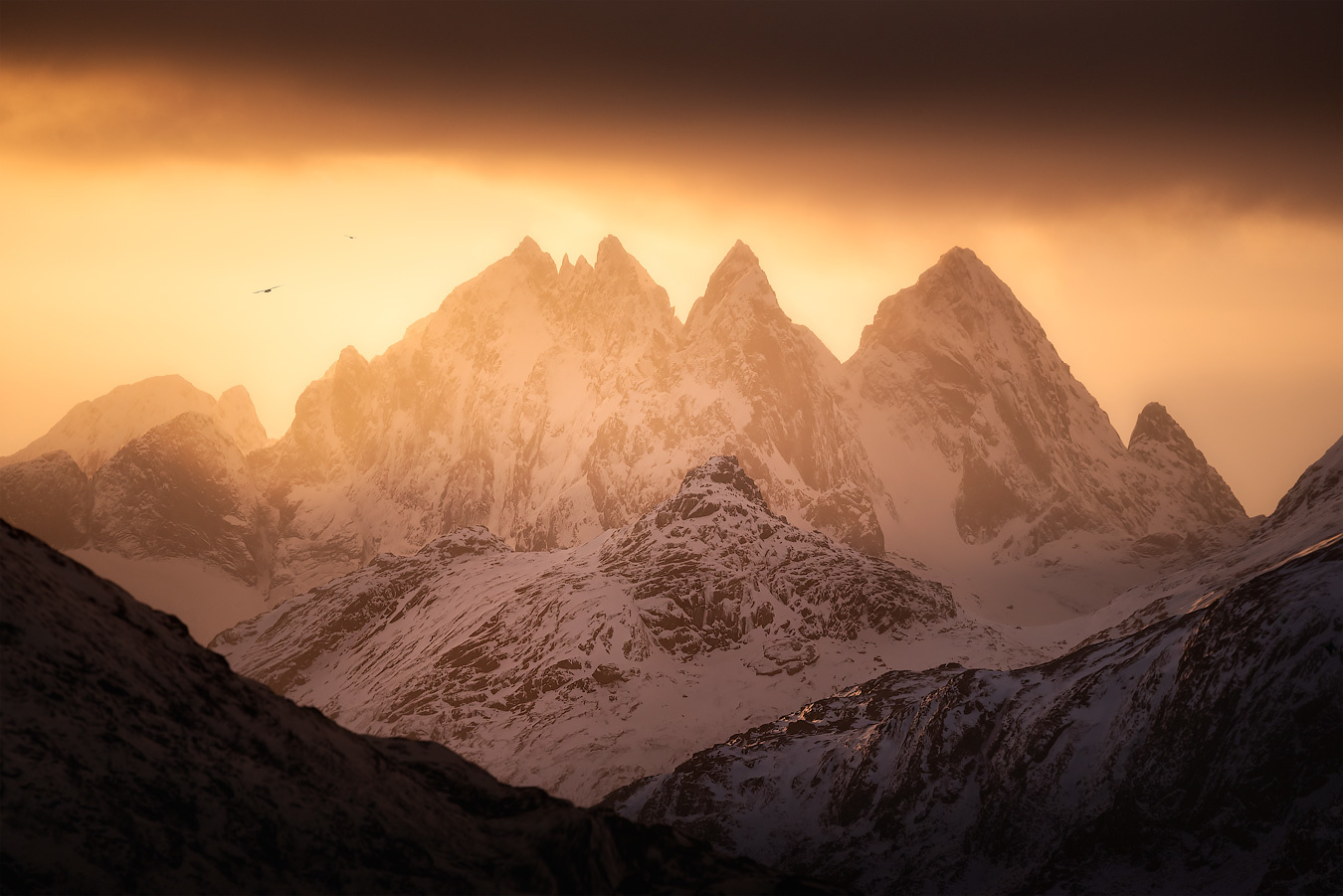 ''Lofoten Gold'' by Kevin Teerlynck