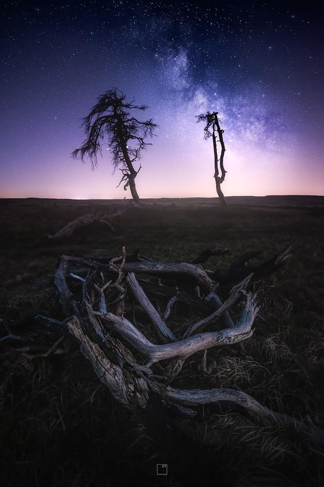 Silent Heathlands by Kevin Teerlynck