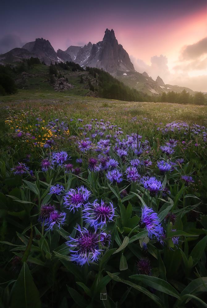 Wildflower paradise by Kevin Teerlynck