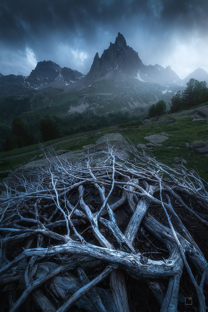 Mountain roots by Kevin Teerlynck
