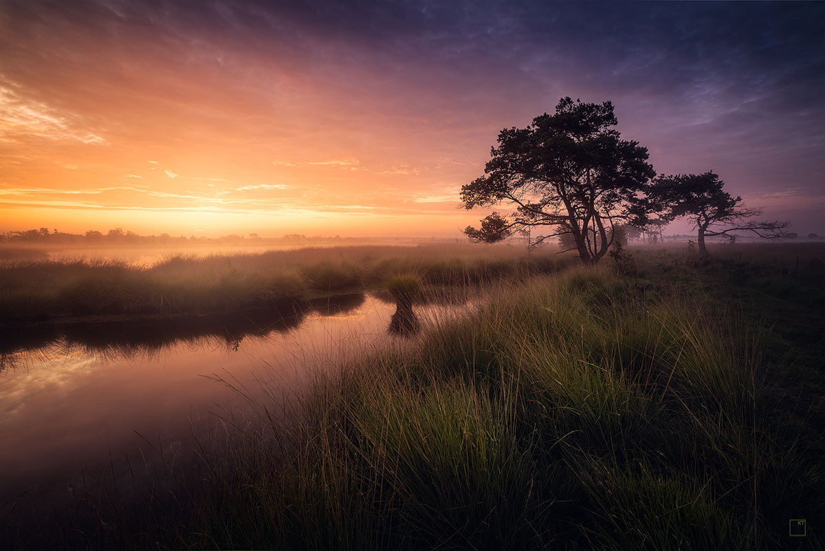 Belgian heath by Kevin Teerlynck