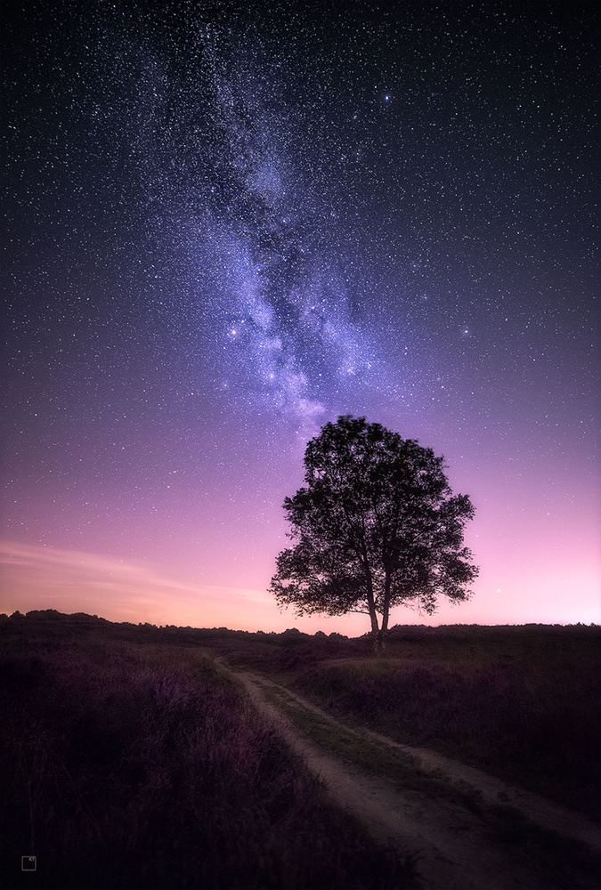 Gleaming stars above the flowering heather by Kevin Teerlynck
