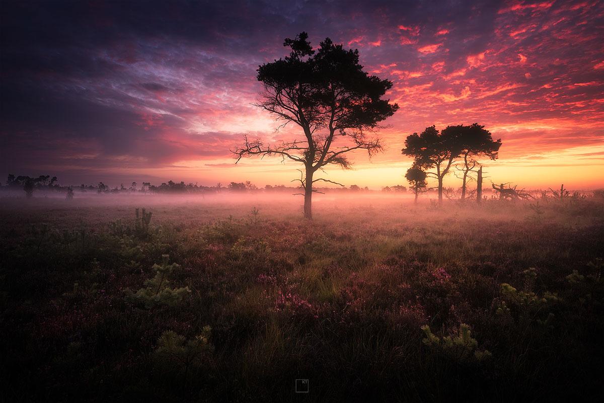 good morning sunshine! by Kevin Teerlynck