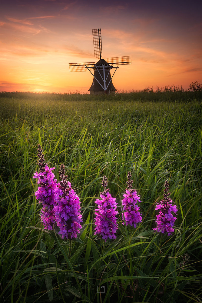 Windmill & Wildflowers by Kevin Teerlynck