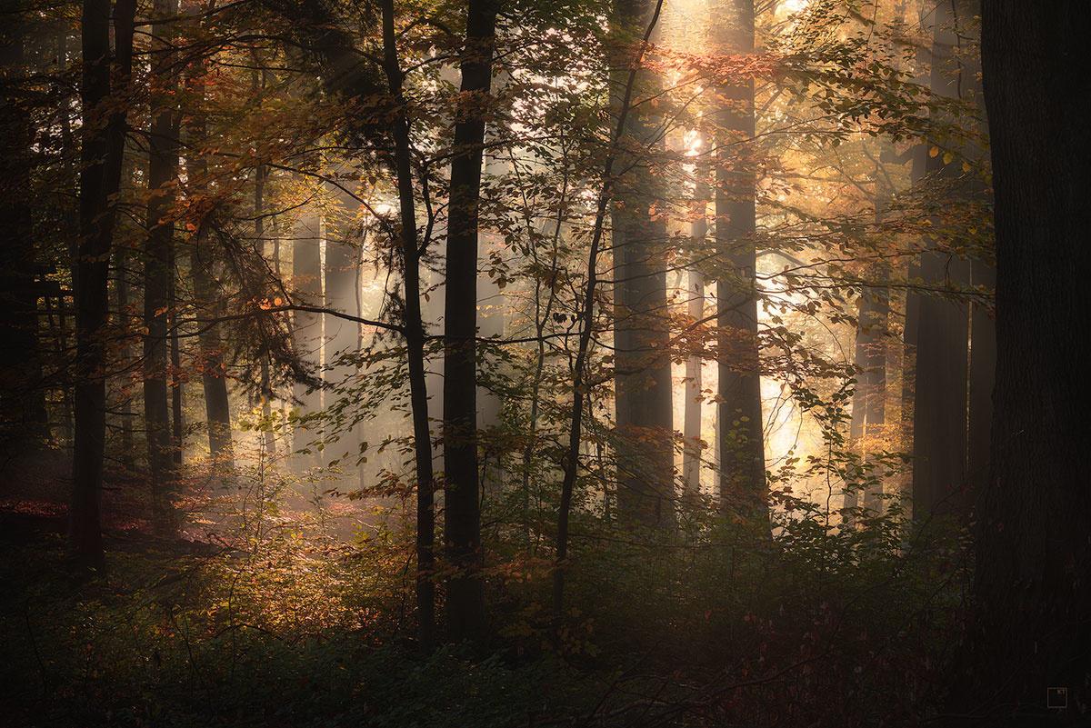 Autumn light by Kevin Teerlynck