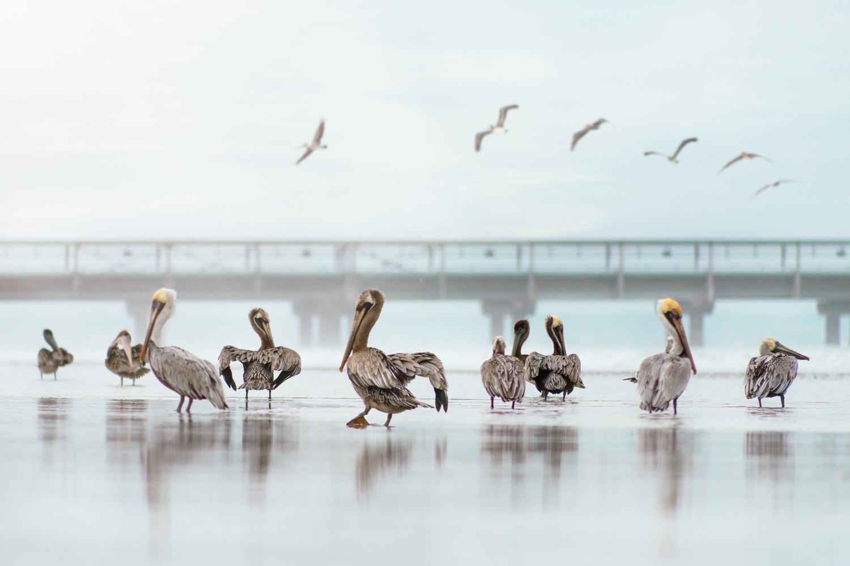 birds by Wadih Anton