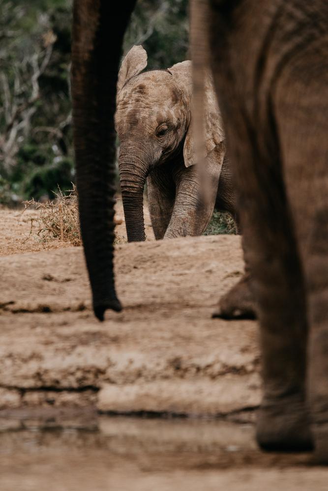 Elephant Family by Ryan Hill