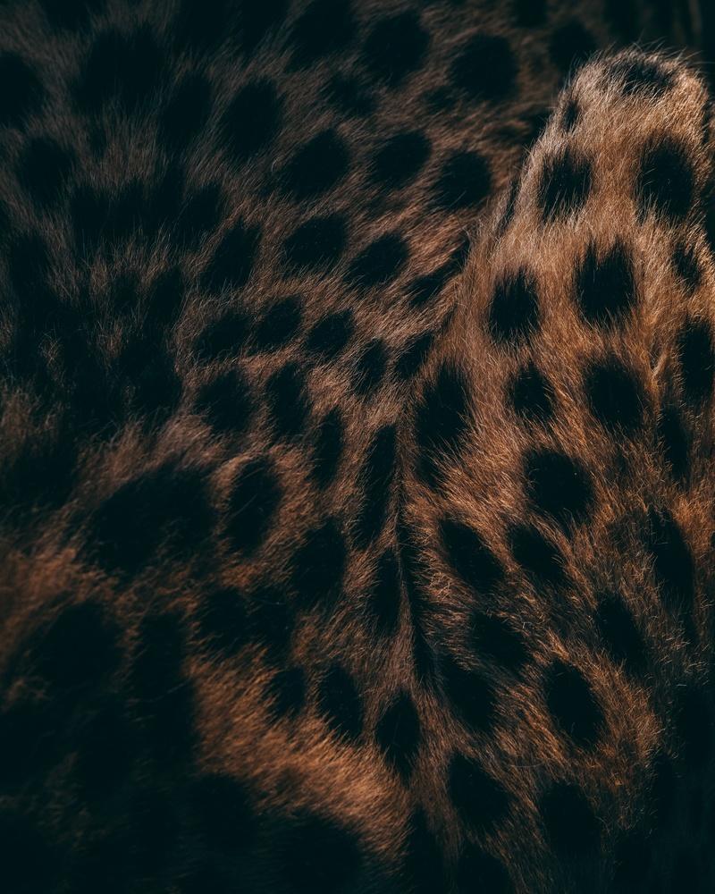 cheetah coat by Ryan Hill