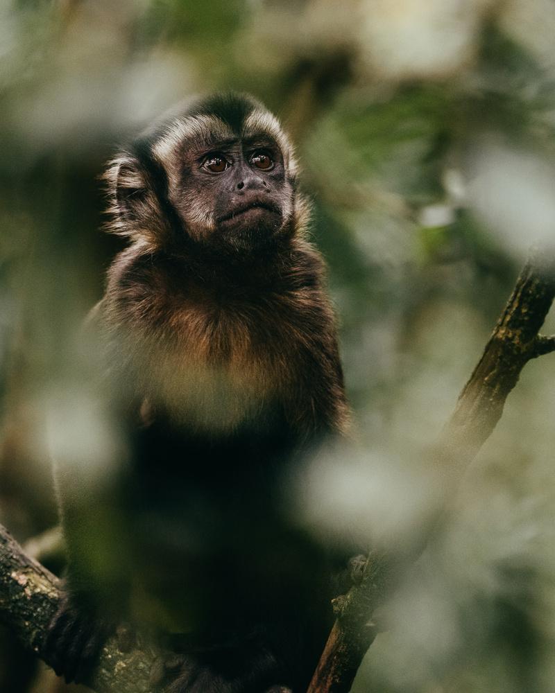 Monkey by Ryan Hill