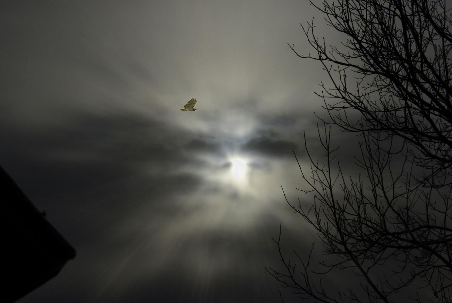 Bird of Prey by Manny Gonzales