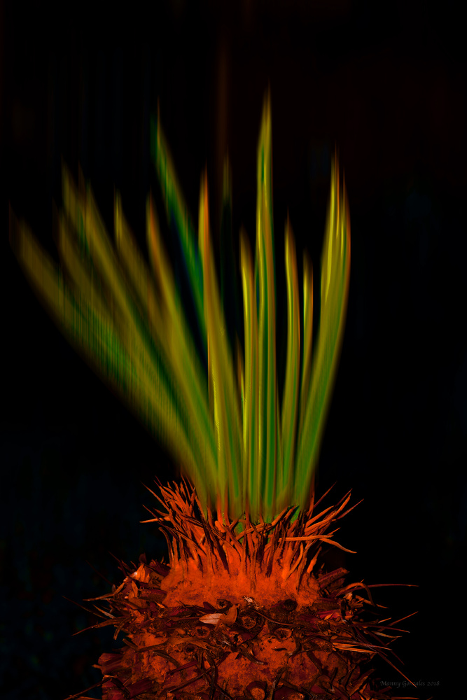 Blurry Palm by Manny Gonzales